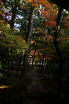 Maple_fukuoka_06