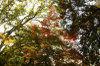 Maple_fukuoka_14_2