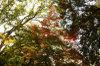 Maple_fukuoka_24